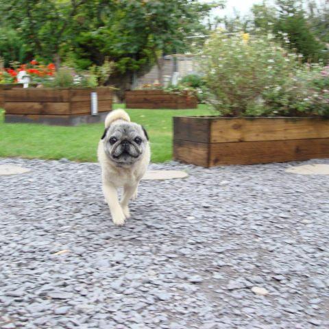 Dogs Needing Homes Wales