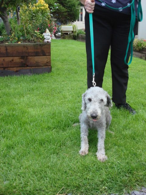 Dog Rescue Dyserth North Wales